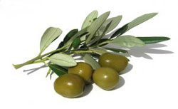 Olive flesh is used to make olive oil